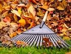 Уборка опавших листьев осенью